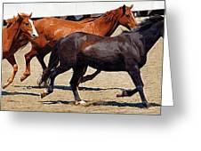 Three Horses Galloping Greeting Card