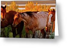Three Horses Of A Suspicious Corral Greeting Card