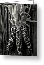Three Indian Corn In Black And White Greeting Card