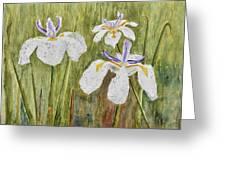 Three Irises In The Rain Greeting Card