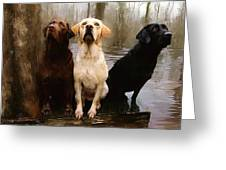 Three Labs Greeting Card by Robert Smith