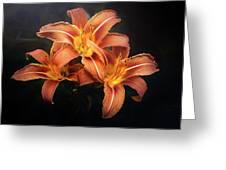 Three Lilies Greeting Card