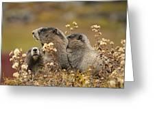 Three Marmots 2 Greeting Card