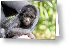 Three Month Old Spider Monkey Greeting Card