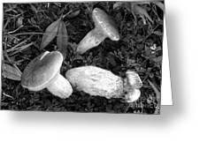 Three Mushrooms Greeting Card