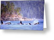 Three Orca Whales Greeting Card