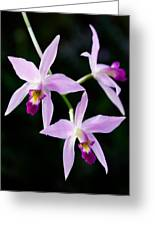Three Orchids Greeting Card
