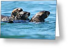 Three Otters Greeting Card
