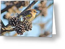 Three Pine Cones And A Little Bird Greeting Card