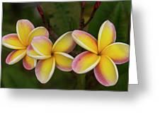Three Pink And Yellow Plumeria Flowers - Hawaii Greeting Card