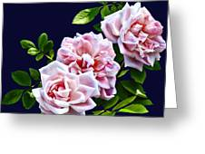 Three Pink Roses With Leaves Greeting Card