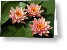 Three Pink Water Lilies Greeting Card