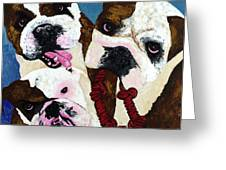 Three Playful Bullies Greeting Card