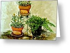 Three Potted Plants Greeting Card