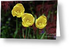 Three Pretty Blooming Yellow Tulips In A Garden Greeting Card