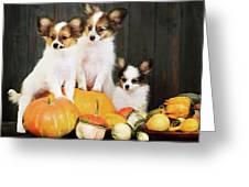 three puppy with pumpkin by Iuliia Malivanchuk Greeting Card