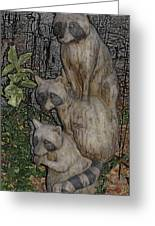 Three Raccoons Greeting Card