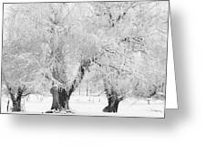 Three Snow Frosted Trees In Black And White Greeting Card