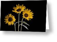 Three Sunflowers Light Painted On Black Greeting Card