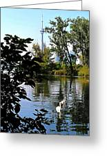 Three Swans And The Cn Tower Greeting Card