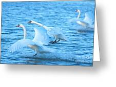 Three Swans Greeting Card