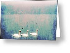 Three Swans Greeting Card by Joana Kruse