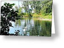 Three Toronto Swans  Greeting Card