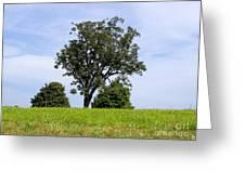 Three Tree Hill Greeting Card