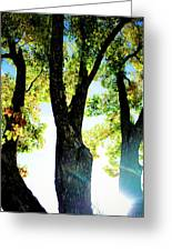 Three Tree Light Greeting Card