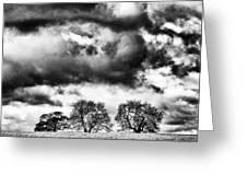 Three Tree Tops Landscape Greeting Card
