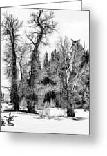 Three Trees Bw Greeting Card
