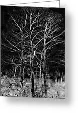Three Trees In Black And White Greeting Card