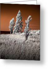 Three Trees  In Infrared On Top Of A Grassy Dune Greeting Card