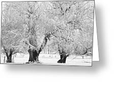 Three Trees In The Snow - Bw Fine Art Photography Print Greeting Card