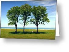 Three Trees Lake Shore Greeting Card