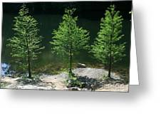 Three Trees Of Ohio Greeting Card