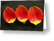 Three Tulip Petals Greeting Card