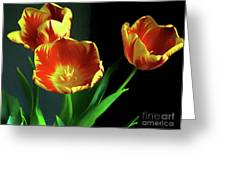 Three Tulips Photo Art Greeting Card