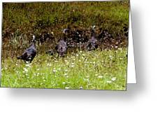 Three Turkeys Greeting Card