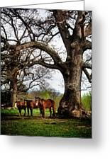 Three Under A Tree Greeting Card