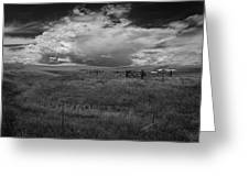 Three White Horse And Corral Bw Greeting Card