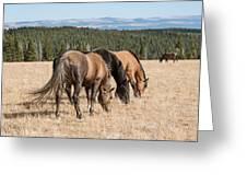 Three Wild Mustangs Greeting Card