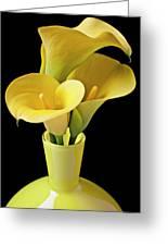 Three Yellow Calla Lilies Greeting Card