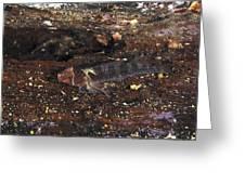 Threefin Blennie Like Fish On Log Greeting Card