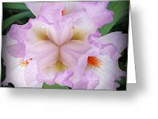 Thrill Of The Frill Greeting Card