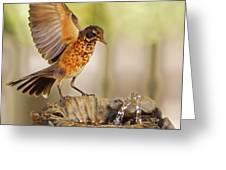 Thristy Robin Greeting Card