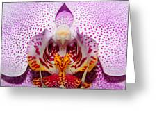 Throat Of An Orchid Greeting Card