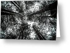 Through The Canopy Greeting Card by Nick Bywater