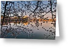 Through The Cherry Tree Greeting Card