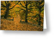 Through The Fallen Leaves Greeting Card